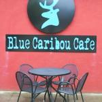 blue-cariboo